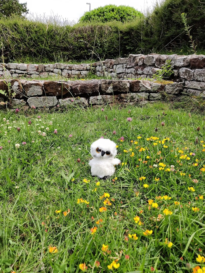 toy white owl in a field
